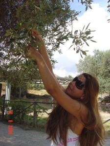 Eu colhendo azeitonas!